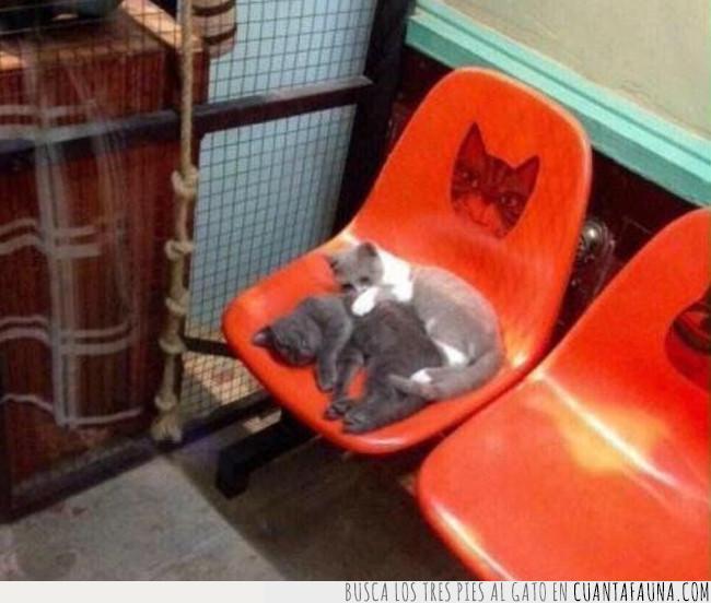 asiento,dormir,dos,gato,pareja,reservado,respeto,siesta