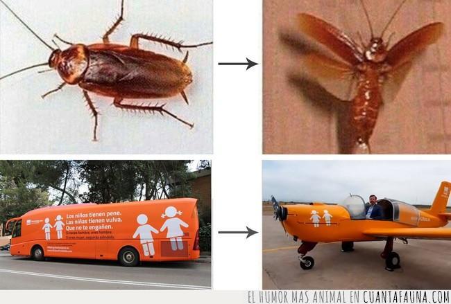asco,avioneta,cucaracha,hazte oír,insecto,miedo,transfobia,volar