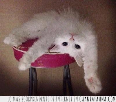 arriesgar,blanco,foto,gato,mejor,perfil,revés,sacar,silla,taburete,vida