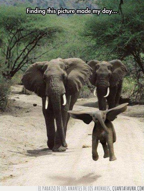 chop,disney,dumbo,edición,elefante,montaje,photoshop,saltar,truco