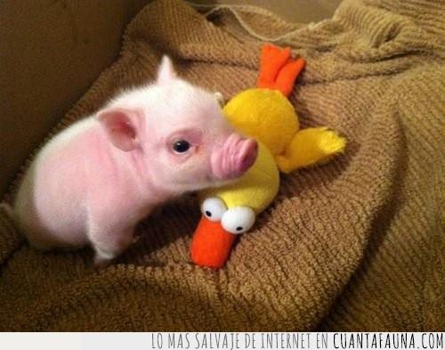 amarillo,cerdo,cría,dormir,echar,pato,peluche,pequeño,rosa,siesta