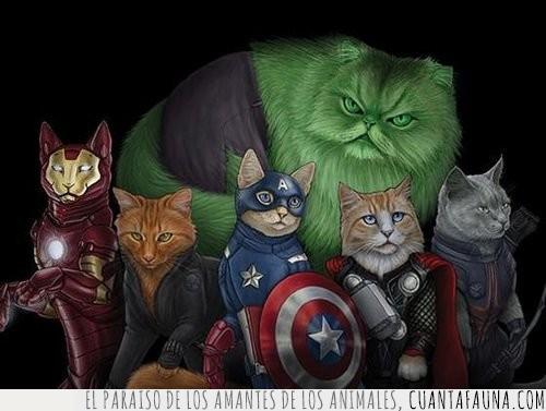 avengers,gatos,héroes,mejores
