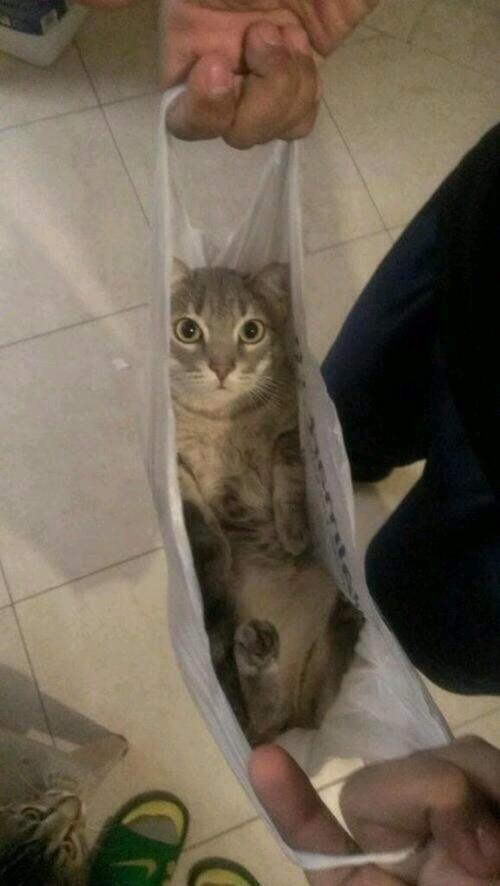 bolsa,comprar,equivocar,gato,no