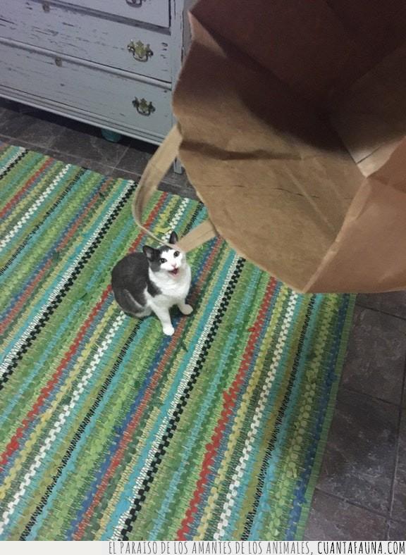 agradecido,bolsa,cara,felicidad,gato,papel