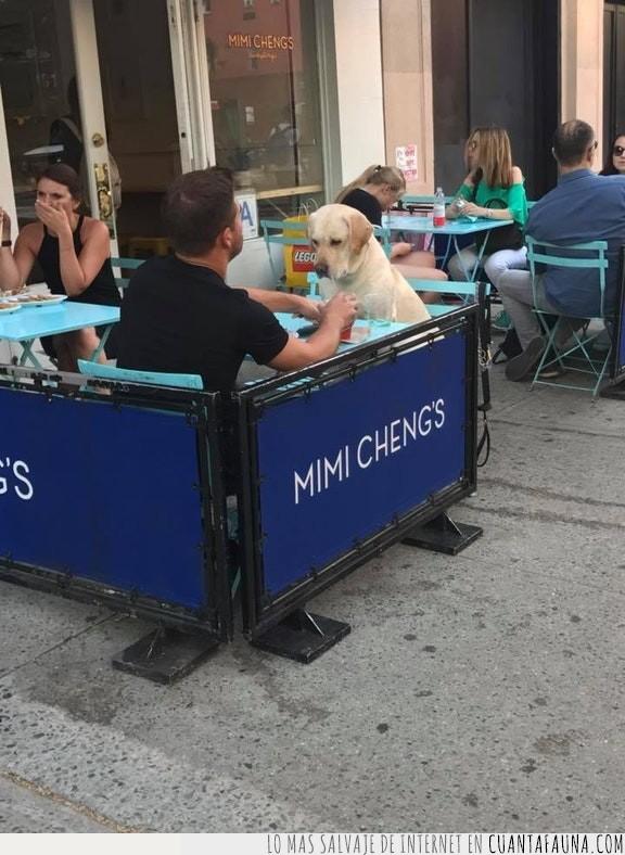bien,cita,comer,comida,dos,pareja,perro