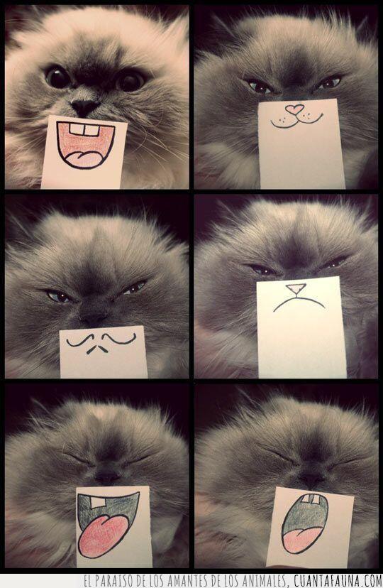 boca,caras,expresiones,expresivo,gato,lengua,papel,post it,sonrisa