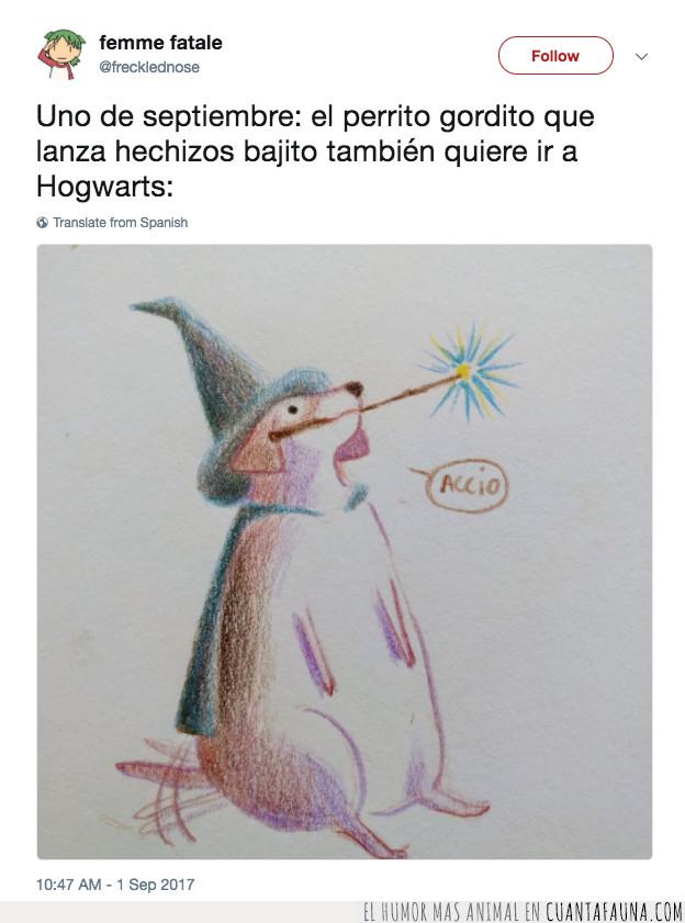 colegio,día,dibujo,harry potter,hechizo,libros,perro,rowling,saga,septiembre,uno