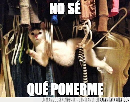 armario,crisis,decidir,gatos,poner,ropa
