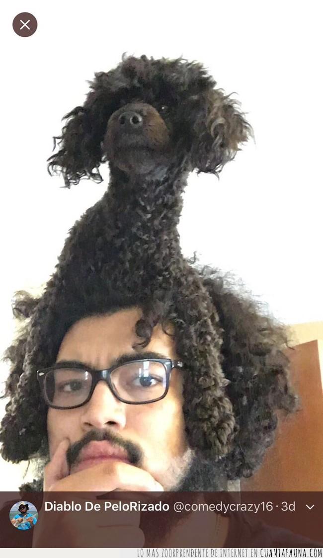 afro,cabezam,mirar,negro,perro,raro,rastas,rizado