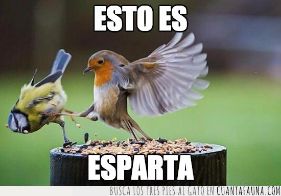 agujero,caer,caída,empujar,es,esparta,esto,frase,pájaros,película