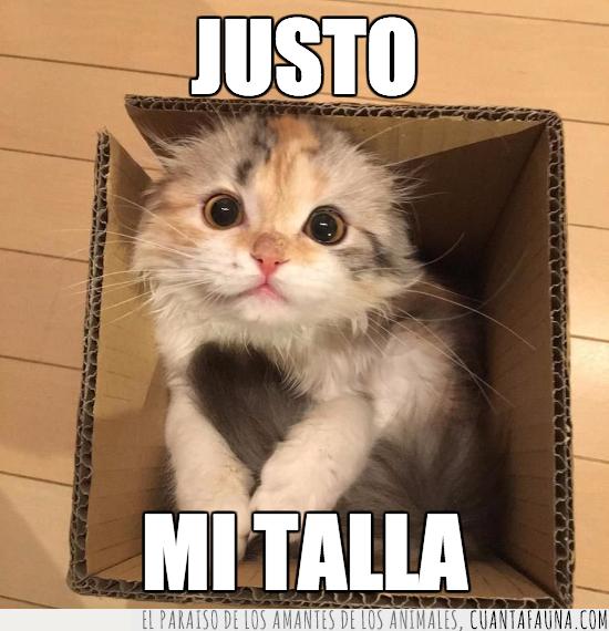 caber,caja,cartón,encajar,gato,justo,medida,talla,tamaño
