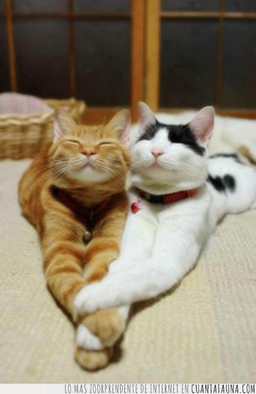 adorable,estirados,gato,juntar,pareja,patas
