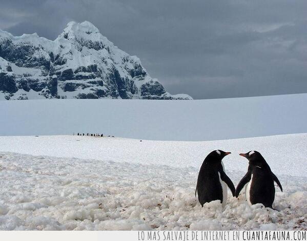 día,paisaje,pareja,pingüinos,romántico