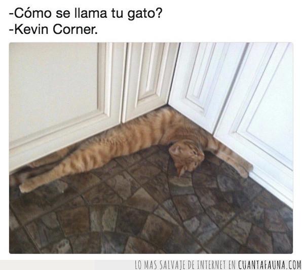 cocina,corner,esquina,gato,inglés,juego,kevin,mueble,palabras,suelo