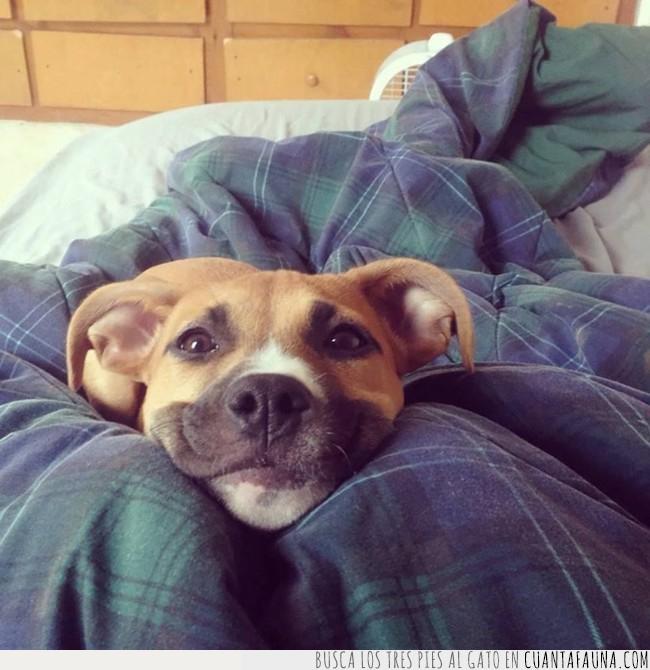buenos días,cara,feliz,perro,viernes