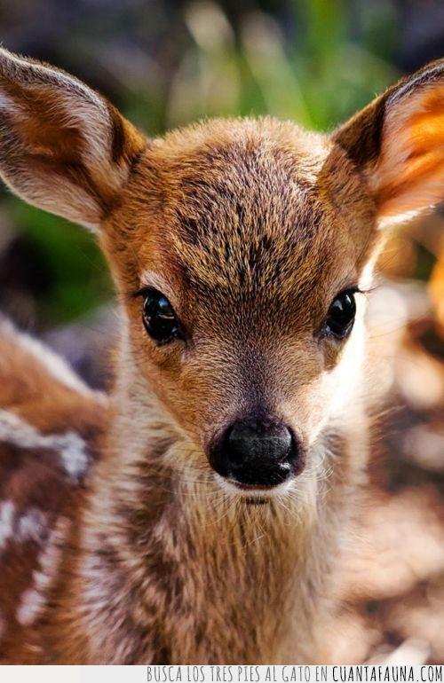 bebé,bonito,cervatillo,ciervo,cría,mundo