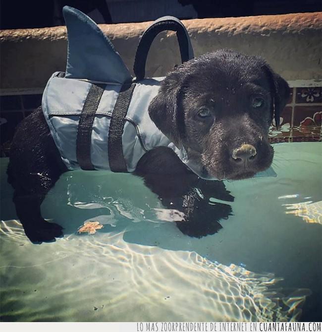 agua,aire libre,aprender,cachorro,clases,nadar,natación,perro,piscina
