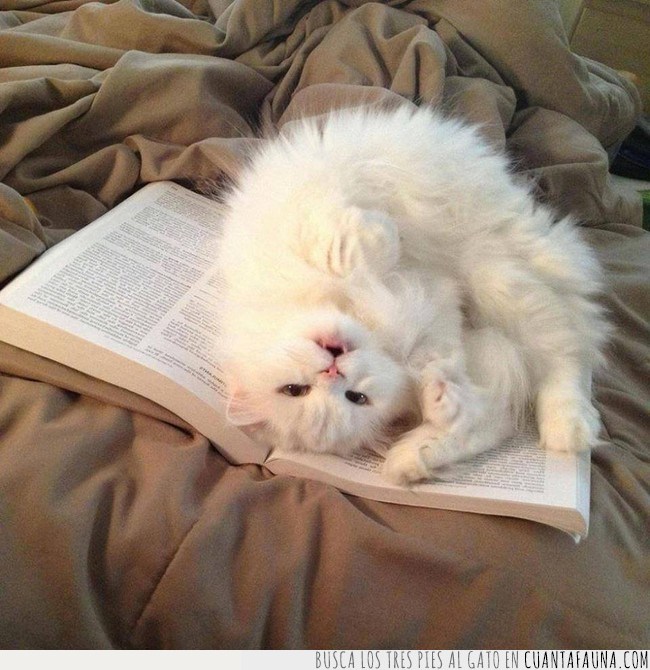cabeza,gato,intentar,interrumpir,leer,libro,postura,revés