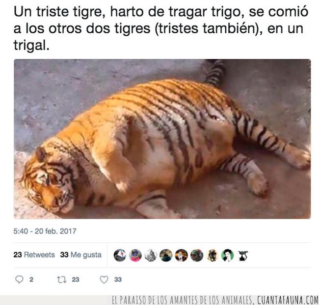 historia,refrán,tigre,trabalenguas