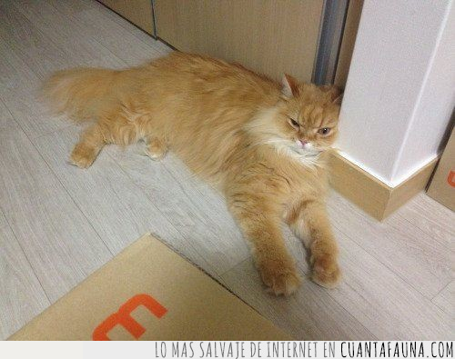 cansado,cara,descansar,enfadado,gato,puerta