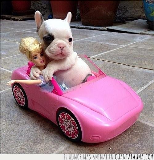 barbie,coche,cría,descapotable,juguete,perro