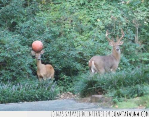 básquet,ciervo,jugada,pelota