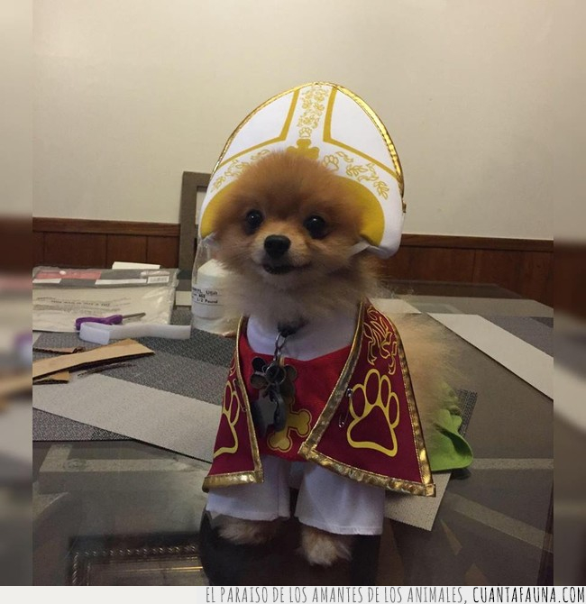católica,iglesia,juan,papa,perrete,perro,respeto