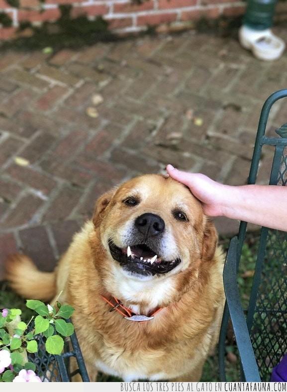 buen,cara,chico,perro,sonreír