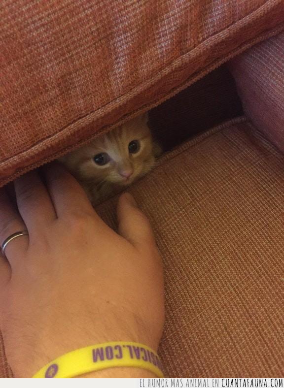 caer,comida,esconder,gato,migas,restos,sofá