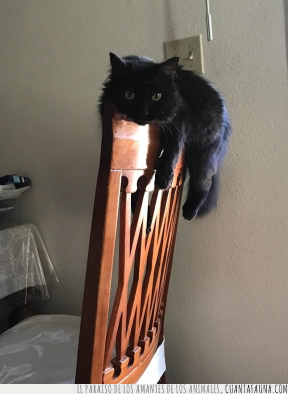 así,colgar,encima,gato,horas,patas,silla,tirar
