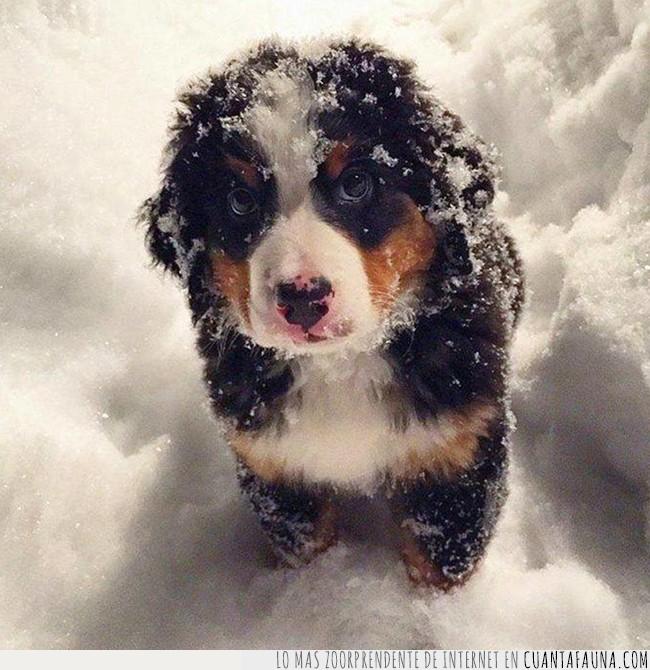 cachorro,nieve,perro
