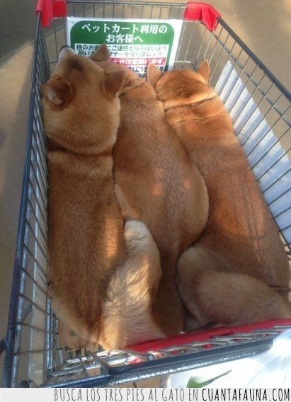 básicos,cachorros,carrito,compra,esenciales,perro