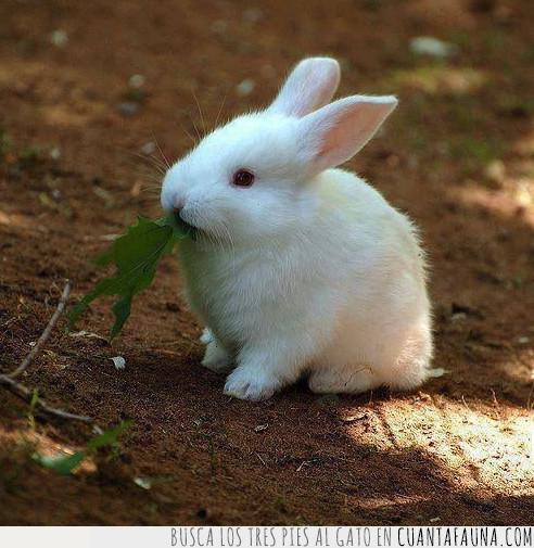 bebé,blanco,conejo,hoja,verde
