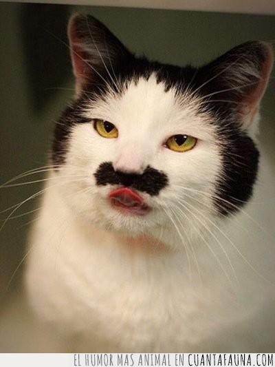 bigote,gato,mancha,negro