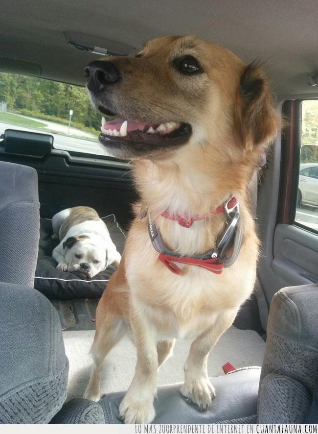 coche,parque,perro,reacción,salida,unánime