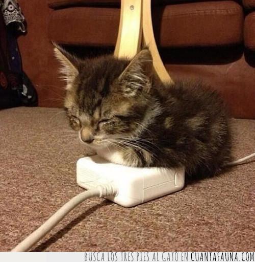 cargador,cría,energía,gato,renovable