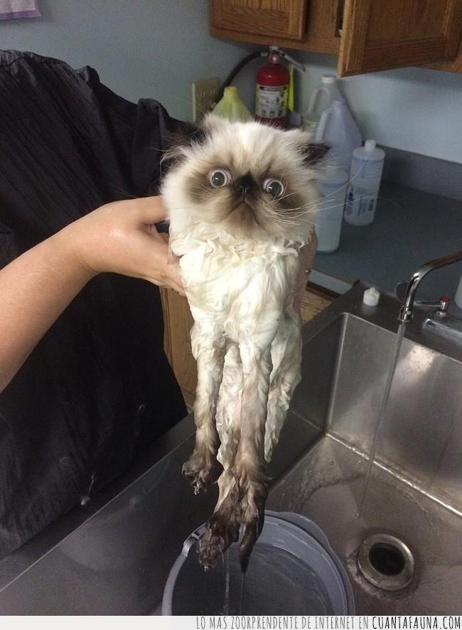 agua,decir,gato,lavar,limpiar,odiar