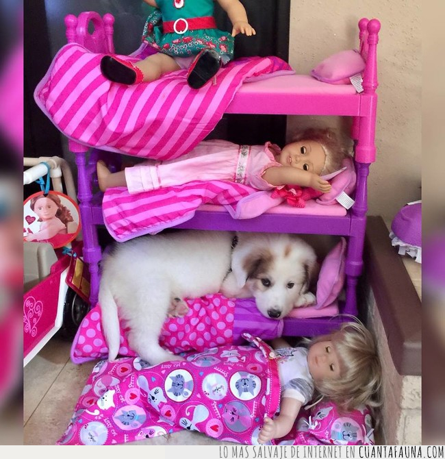 cama,dormir,guardar,juguetes,litera,muñecas,organizar