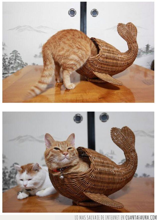 cesta,ejemplar,gato,mimbre,pescado,pesgato,raro
