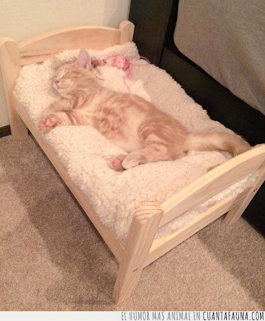 cabeza,cachorro,cama,dormilón,dormir,gato
