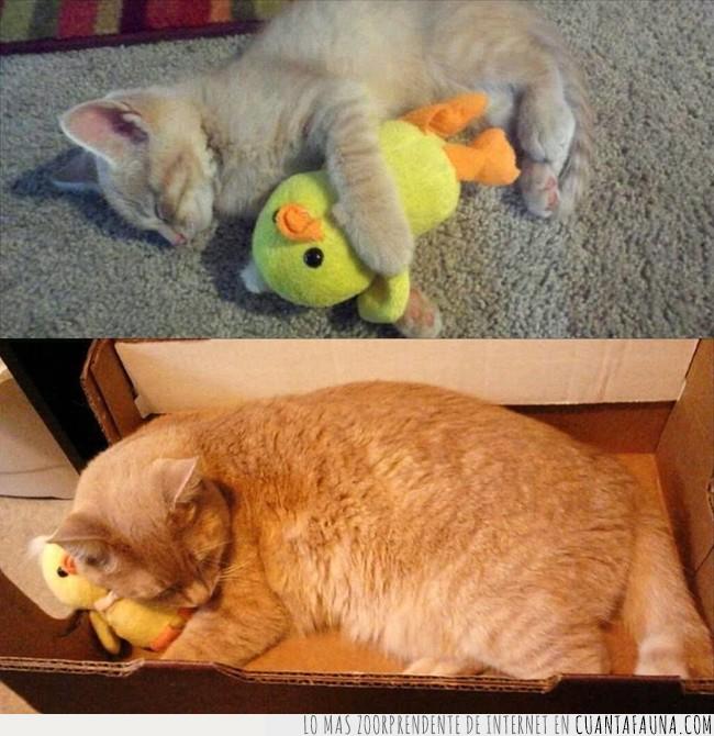 amarillo,canario,gato,pájaro,peluche,periquito,piolín