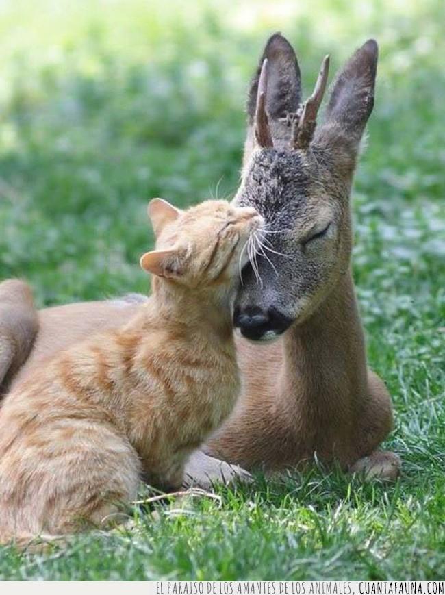 amor,ciervo,gato,lenguaje,universal