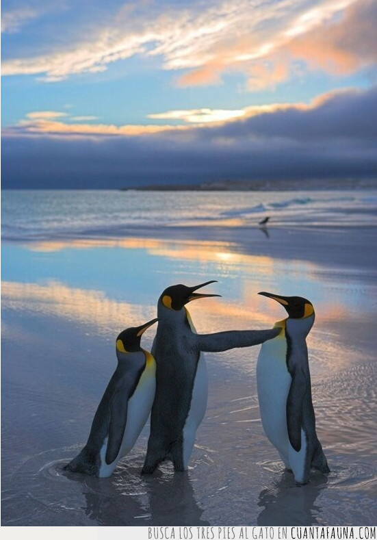 ala,amigo,apartar,camino,meter,pingüino
