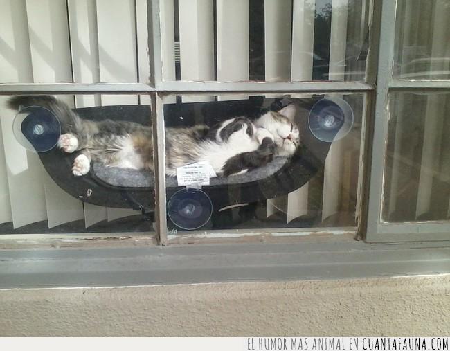 contento,gato,hamaca,vecino,ventana