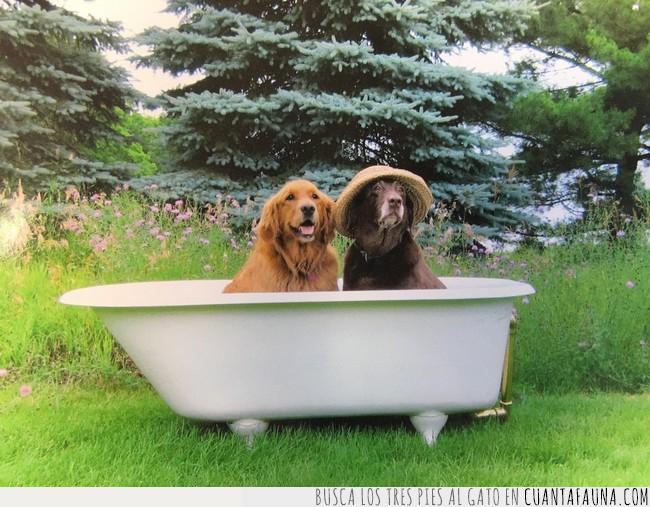 bañera,fotos,mejor,perros,sesión