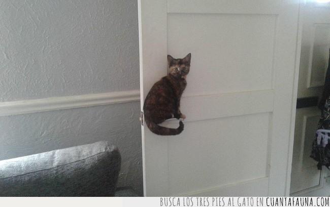 aguantar,fascinante,gato,pomo,posición,postura,puerta,sostener