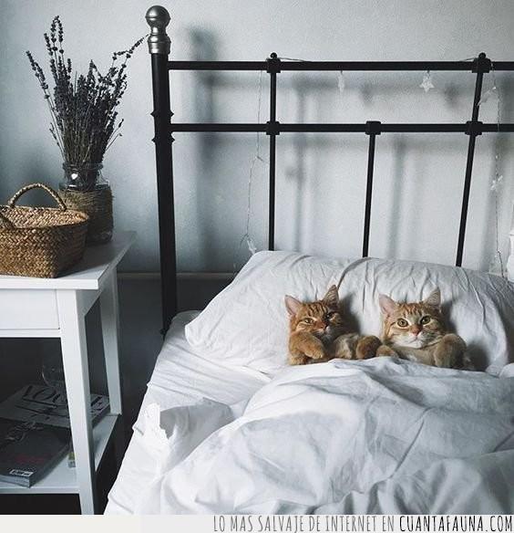 cama,cuento,dormir,gatos,hora,leer