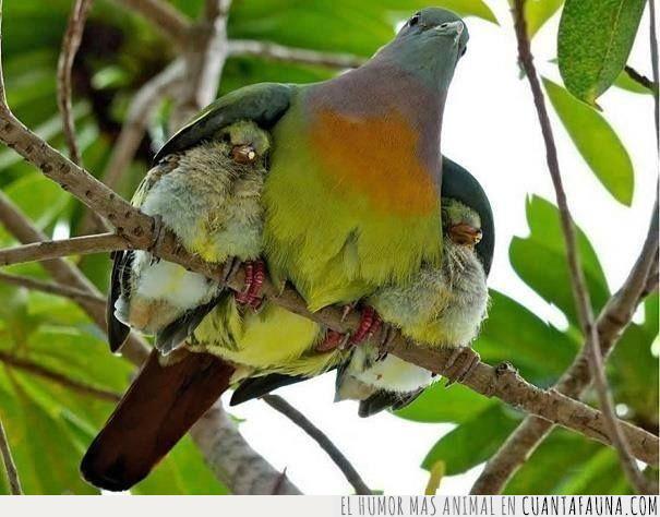 alas,crías,frío,madre,padre,pájaro,protección,resguardado