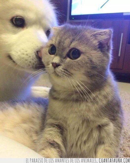 decir,gato,oído,oreja,perro,refrán,secretos
