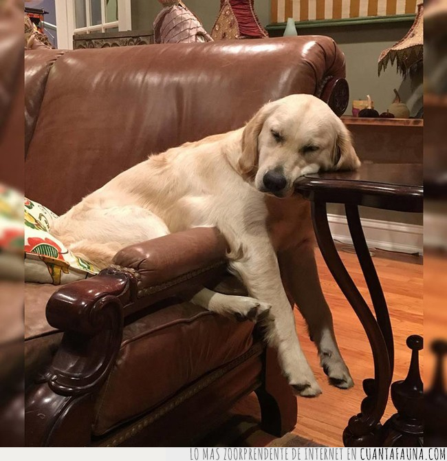 butaca,cansado,día,mesa,miércoles,perro,semana,sillón